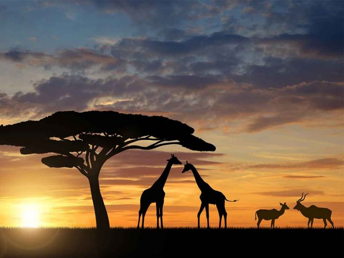 Sudáfrica Beca Pregrado en Diversas Áreas Monash South África