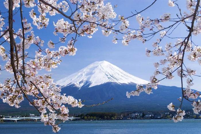 Japón: Beca Doctorado en Diversas Áreas  IDE-JETRO