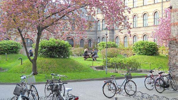 Dinamarca: Becas para Doctorado en Cardiología University of Copenhagen