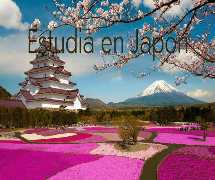 Japón: Beca Pregrado en Diversas Áreas  Universidad  Temple