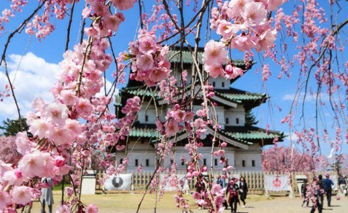 Japón: Beca Postdoctorado en  Estudios Transdisciplinarios CSEAS