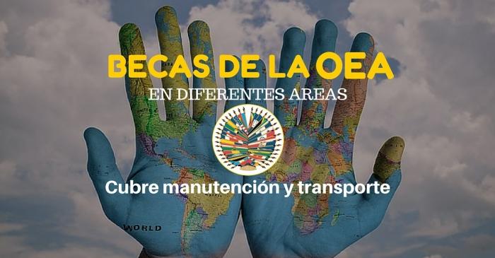 Online: Beca Pregrado Diversas Áreas  OEA