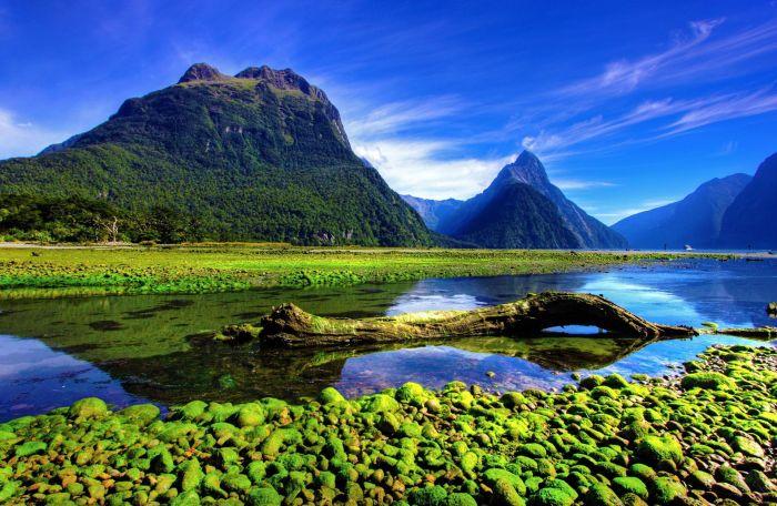 Nueva Zelanda: Beca Doctorado en Literatura Universidad de Otago