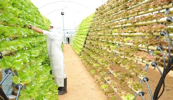 Becas para Investigación de Doctorado en Agricultura y Nutrición Gobierno del Reino Unido