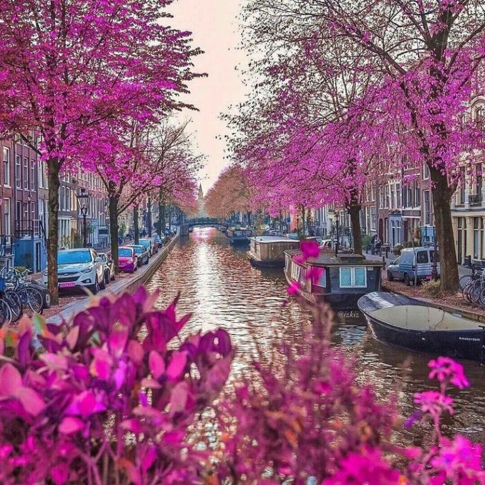 Holanda: Beca Pregrado, Maestría o Doctorado en  Diversas Áreas  A-1 Auto Transport