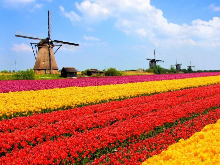 Holanda: Beca Doctorado en Gestión Estratégica Universidad de Radboud