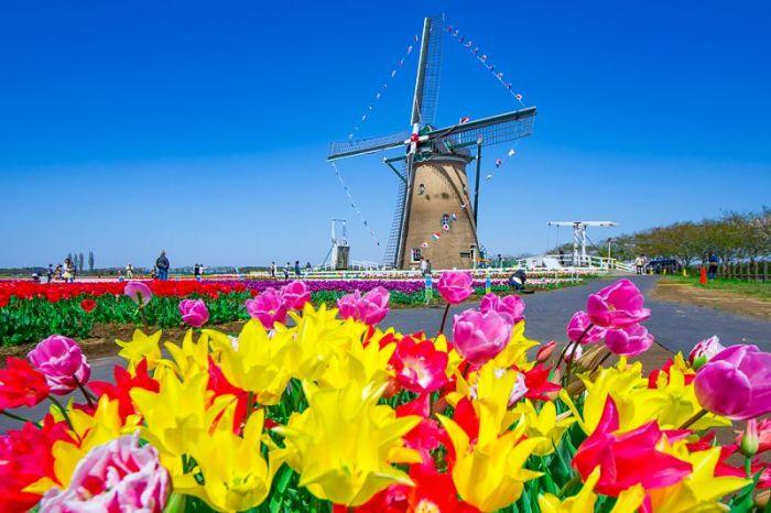 Holanda: Beca Maestría en Diversas Áreas Radboud University
