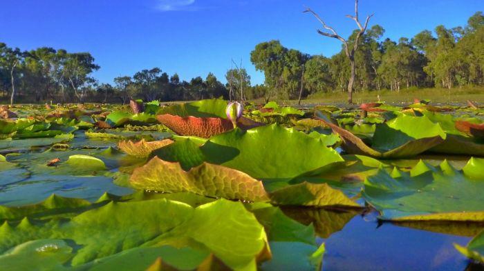 Australia: Beca Pasantía  en Cinematografía Universidad de Griffith