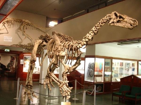 Noruega: Becas para Doctorado en Paleobiología y Paleontología University of Oslo