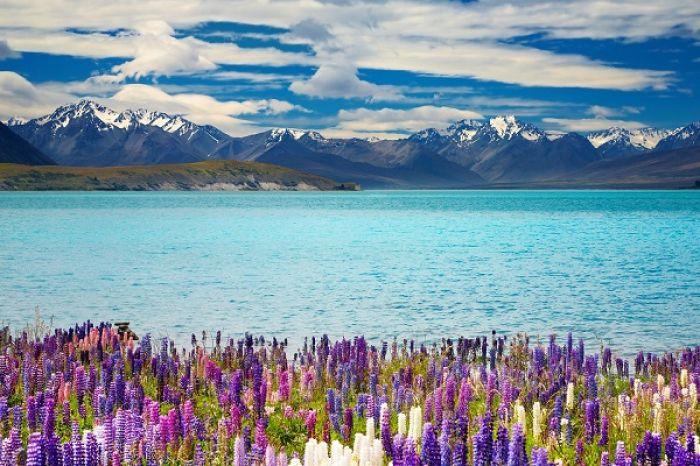 Nueva Zelanda: Beca Pregrado, Maestría o Doctorado en Derecho  Victoria University Wellington
