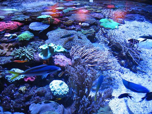 Australia: Becas para Doctorado en Ciencias Naturales Australian Museum